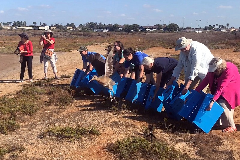 Volunteers helping U.S. Fish and Wildlife Service to release seven endangered...