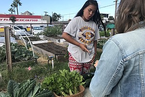 City Heights Refugee Youth Harvest Plants, Job Skills