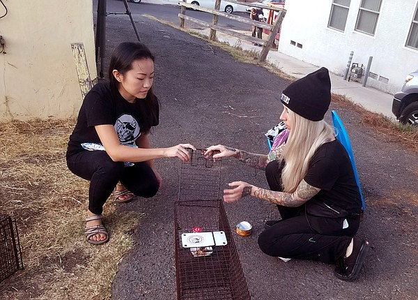 Hannah Shaw and another volunteer set a trap for a feral ...
