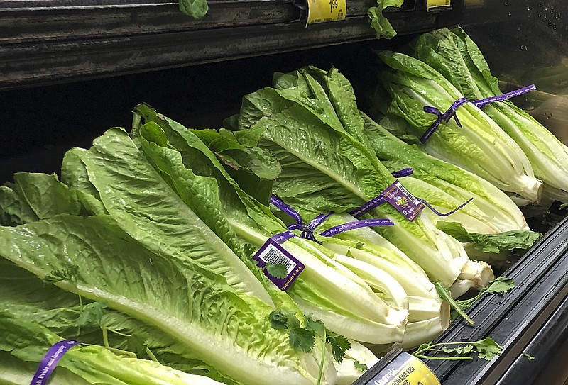 This Nov. 20, 2018 file photo shows Romaine Lettuce in Simi Valley, Calif. U....