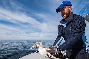 Photo for SeaWorld Animal Care Staff Release Rescued Blue-Footed Booby Back Into Wild
