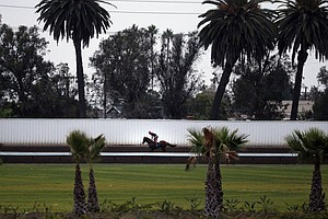 2 Horses Die After 1st Race At Los Alamitos Racetrack