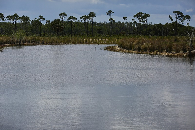 A settling pond, which collects water and allows nutrients to settle, at the ...