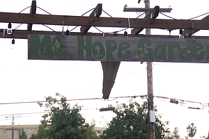 Photo for Mt. Hope Community Garden Re-Opens With Focus On Food Justice