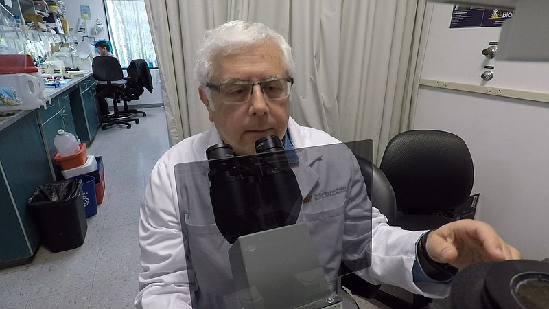 Cancer researcher Ze'ev Ronai looking into a microscope at the Sanford Burnha...