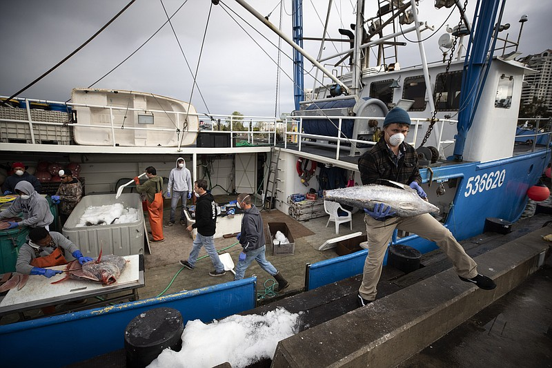 Fishing boat captain Nick Haworth, right, carries tuna to a dock for sale Fri...