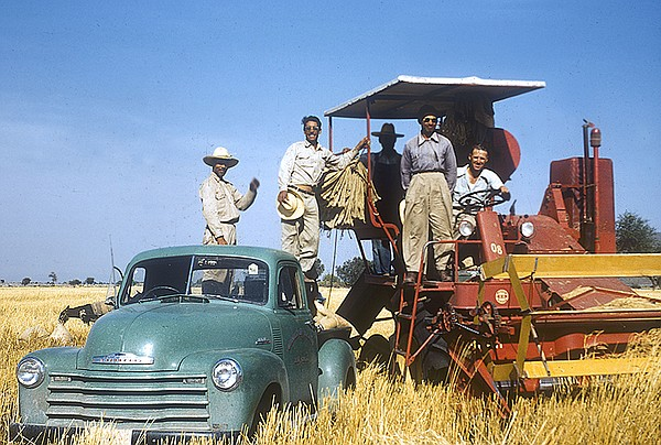 Norman Borlaug (behind steering wheel) with Mexican field...