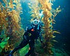 An aquarist who has dived into an underwater ke...