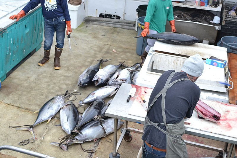Fishermen slice open large freshly caught fish on a boat docked by the Tuna D...