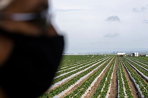 Photo for How California Farms Can Survive The Post-Pandemic World