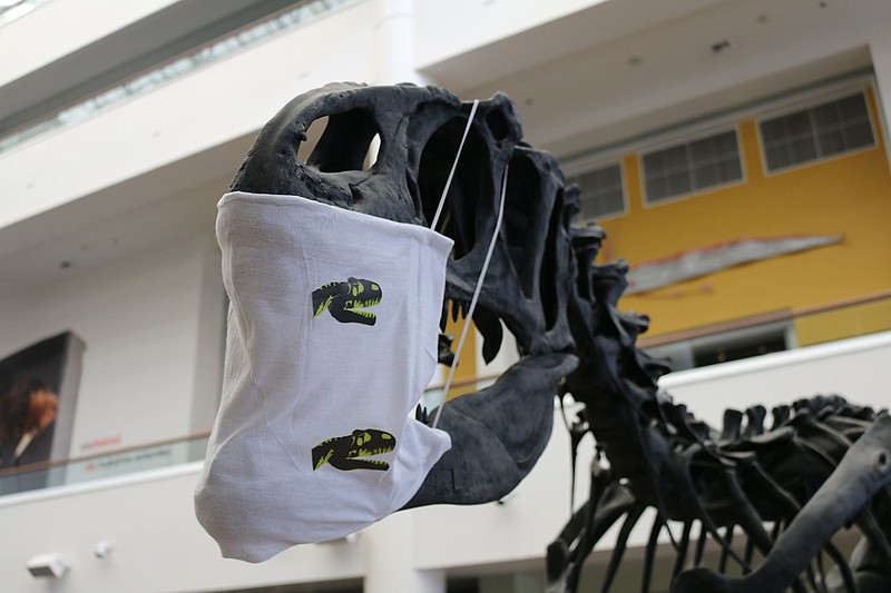 At the San Diego Natural History Museum, an Allosaurus wears a mask to remind...