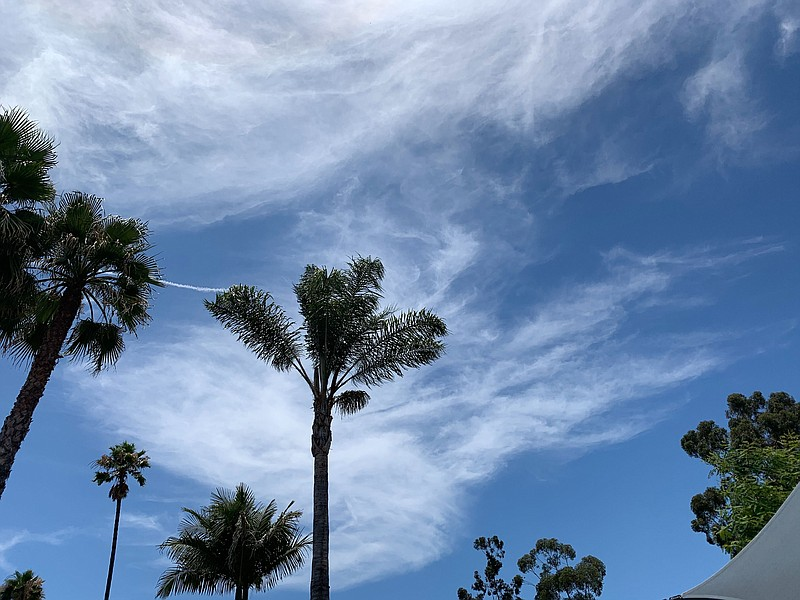 Palm trees on a particularly hot weekend in San Diego, July 12, 2020.