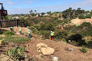 Photo for San Diego Urban Corps Helps Clear Brush, Create Defensible Space