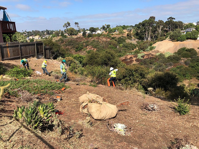 Urban Corps workers clearing brush at the edge of Mazanita Canyon in San Dieg...