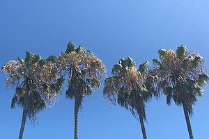 Warm Days, Cool Nights Expected For San Diego County
