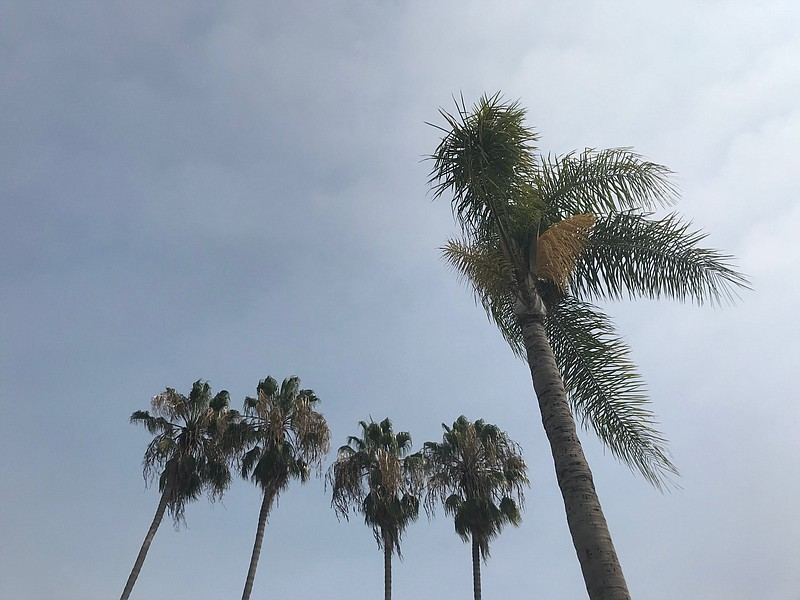 Palm trees against cloudy skies in San Diego County. Sept. 12, 2020.