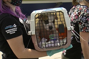 Photo for Dogs, Cats Displaced By Hurricane Laura Touch Down In San Diego