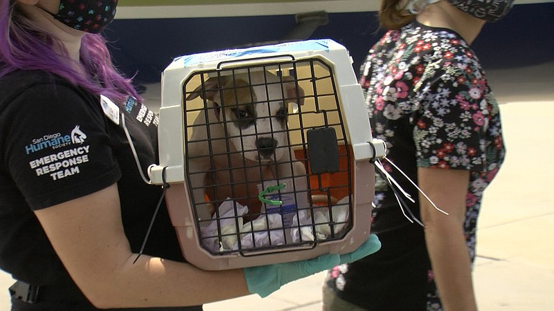 Wings of Rescue volunteers and staff welcome dogs and cats affected by Hurric...