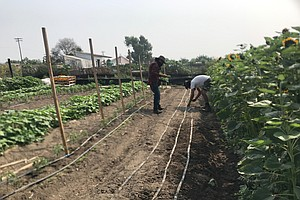 Photo for South Bay Worker Cooperative Looks To Chart The Future Of Urban Farming