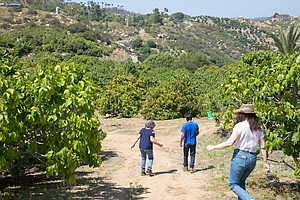 New COVID-19 Funding Now Available For San Diego County Farmers