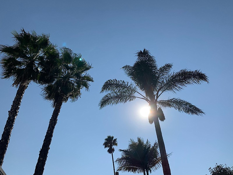 A hot October sun shines through palm trees in the San Carlos neighborhood of...