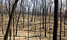 A devastated forest devoid of plants and wildli...