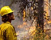 A firefighter watches the flames in Yellowstone...