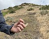 Brian Mealor holds up a sprig of cheatgrass gro...