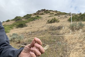 Photo for In Grasslands Plagued By Invasives And Drought, Wildfires Fuel Calls For New ...