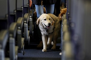 Photo for US Tightens Definition Of Service Animals Allowed On Planes
