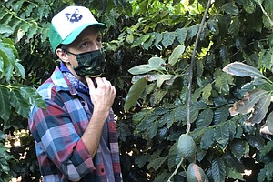 Photo for Coffee Is Growing, Thriving In San Diego's North County