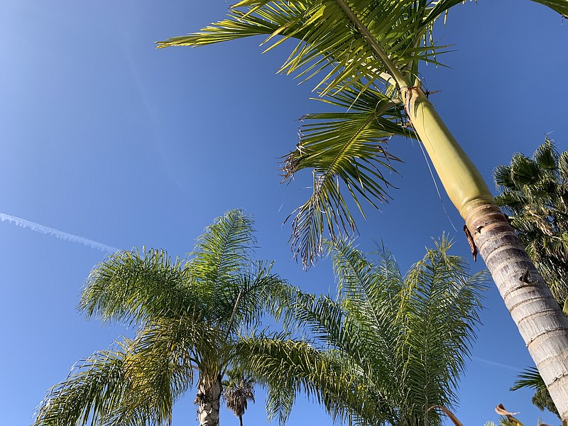 A warm day and palm trees pictured in San Carlos neighborhood, San Diego Coun...