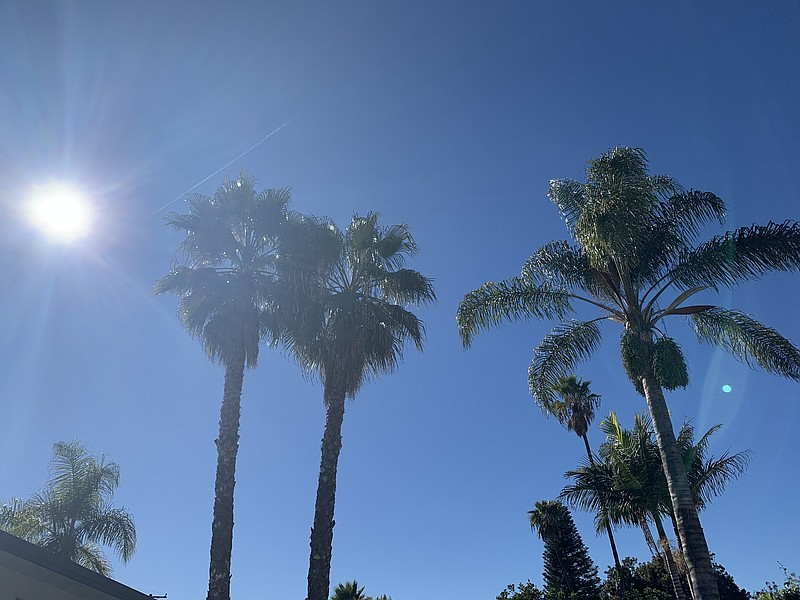 Warm and windy skies behind palm trees in the San Carlos neighborhood of San ...