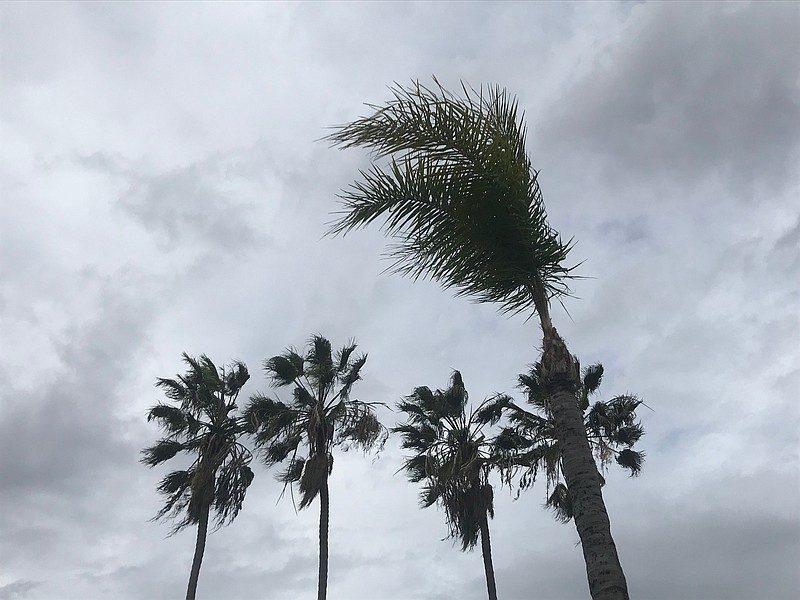 Palm trees sway in high winds in the Golden Hill neighborhood of San Diego Co...