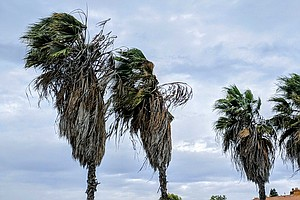Photo for Gusty Winds Forecast Over San Diego County Mountains And Deserts