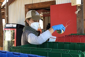 Photo for Encinitas Farm Helps Feed Food Insecure In San Diego