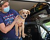 A dog rescued from Texas at Helen Woodward Anim...