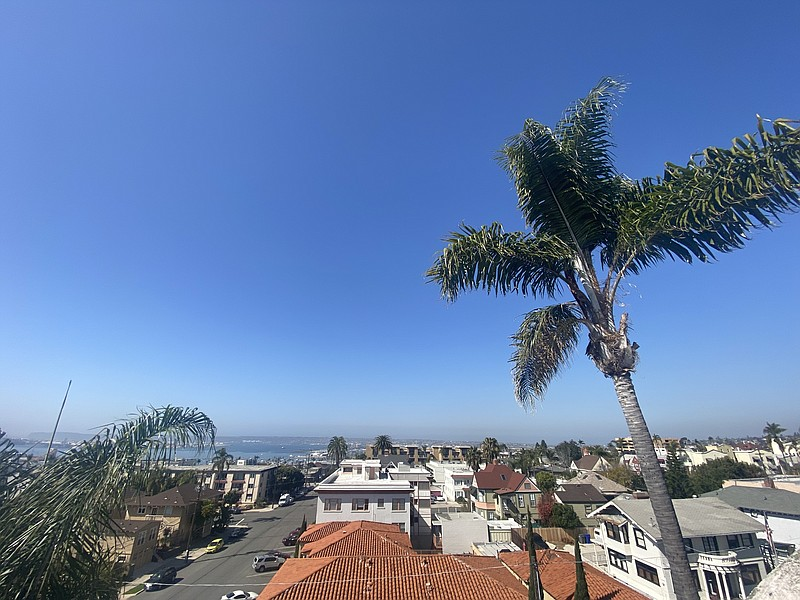 Palm trees sway in the breeze on a sunny day in the Bankers Hill neighborhood...