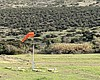 A windsock at a skydiving site in a Jamul, Marc...