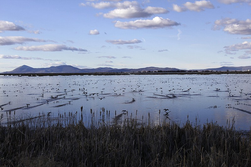 In this March 2, 2020, file photo, birds take off from a marsh in the Tulelak...