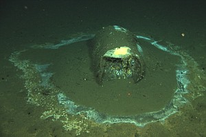 Photo for Scientists: Up To 25,000 Barrels At DDT Dump Site In Pacific