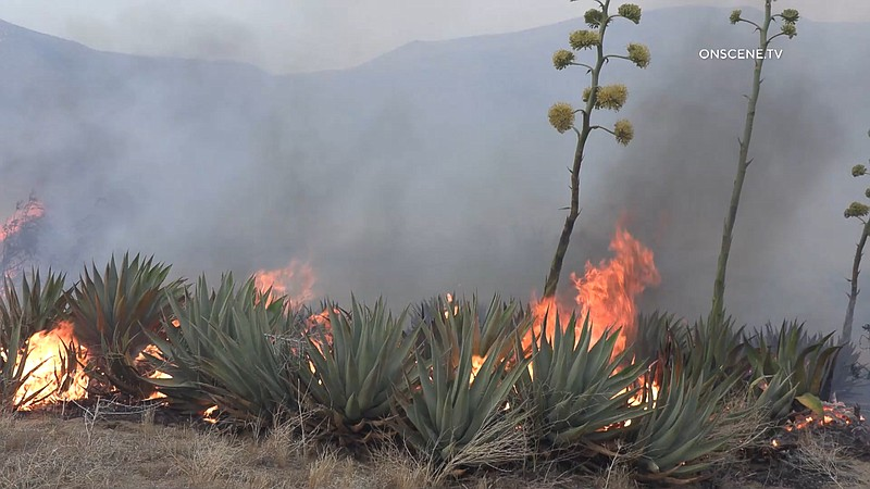 Plants burn from the Southern Fire in the Shelter Valley area east of Julian,...