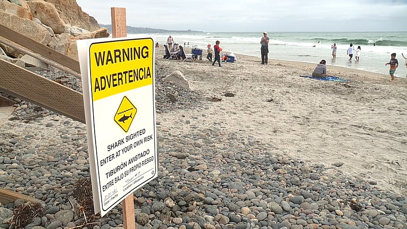 A sign warning beachgoers of a great white shark spotted just off shore is sh...