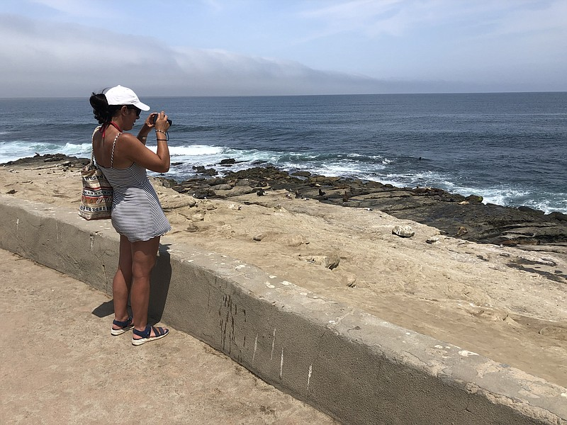 A tourist takes in sea lion moms taking care of their pups along the La Jolla...
