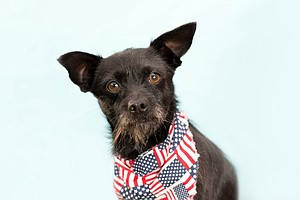 Photo for Local Animal Organizations Remind Owners To Prepare Pets For July 4th