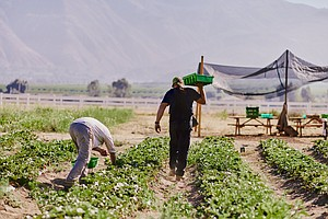 Photo for San Diego Food System Alliance Sets 10-Year Goals To Improve Local Food Systems