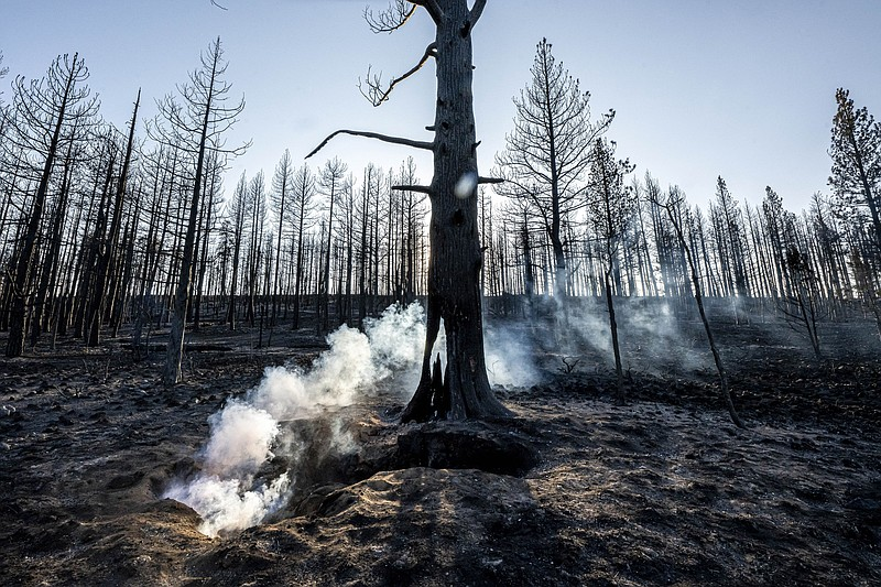Spot fires smolder near trees damaged by the Bootleg Fire on Wednesday, July ...