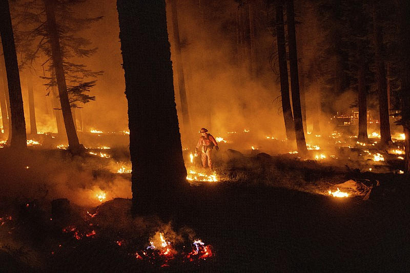 A firefighter uses a drip torch to ignite vegetation while trying to stop the...