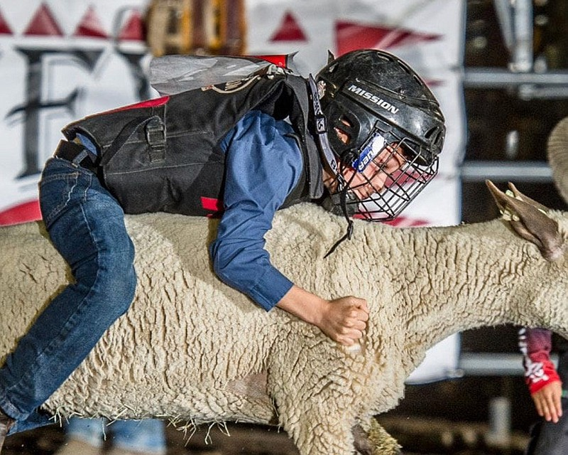 A boy participating in the Mutton Bustin' demonstration at the Ramona County ...