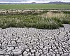 The dried, cracked earth of a former wetland th...